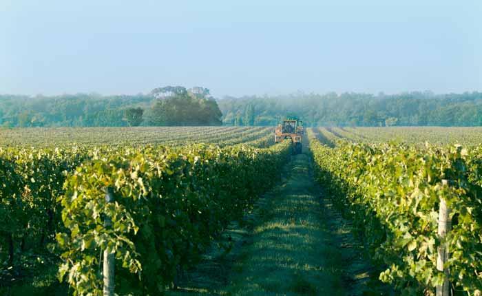 Weinlandschaft in Cognac