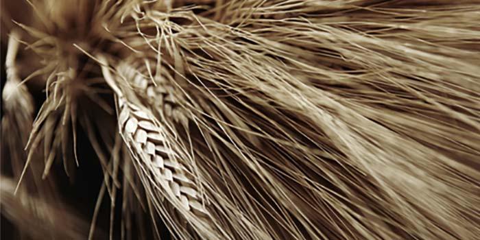 Welches Getreide für die Herstellung verwendet wird ist ausschlaggebend